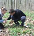Two of the study co-authors, the scientists Carolin Seele (Leipzig University) and Stefan Meldau (Max-Planck-Institute for Chemical Ecology) collect buds for the subsequent analysis of plant hormones and tannins.